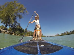 back-cover-how-to-sup-with-your-pup