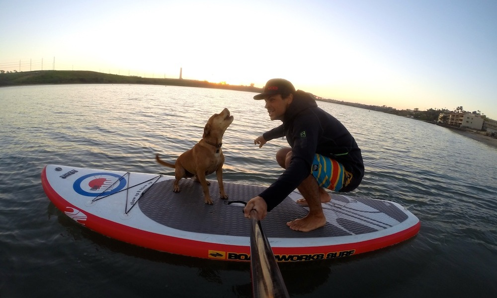 how to keep your dog safe when paddle boarding 3