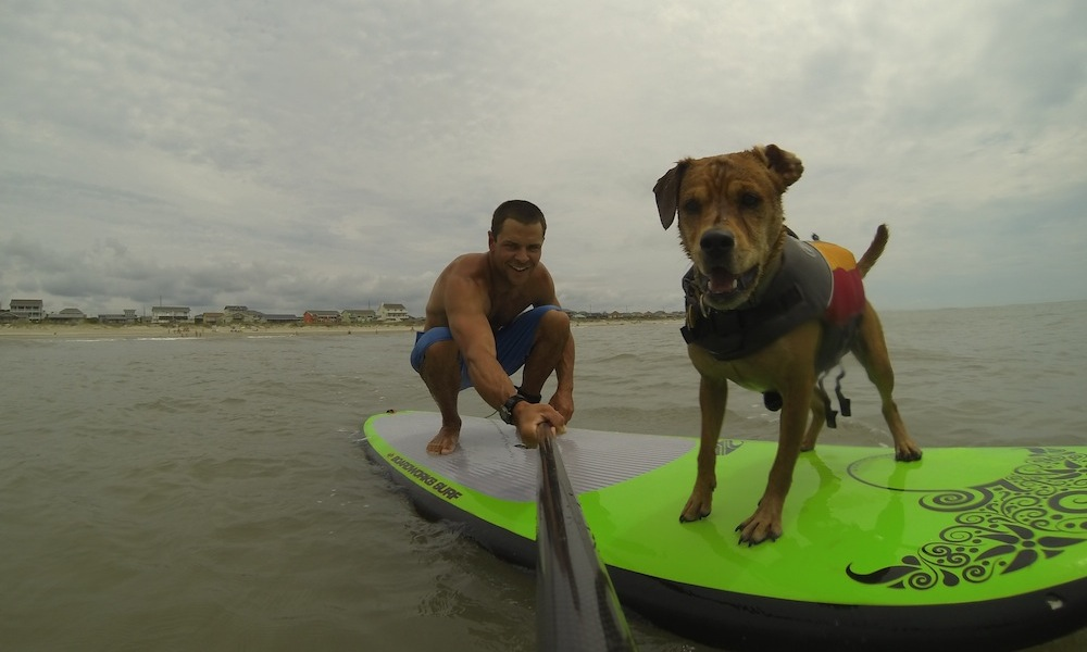 how to keep your dog safe when paddle boarding 5