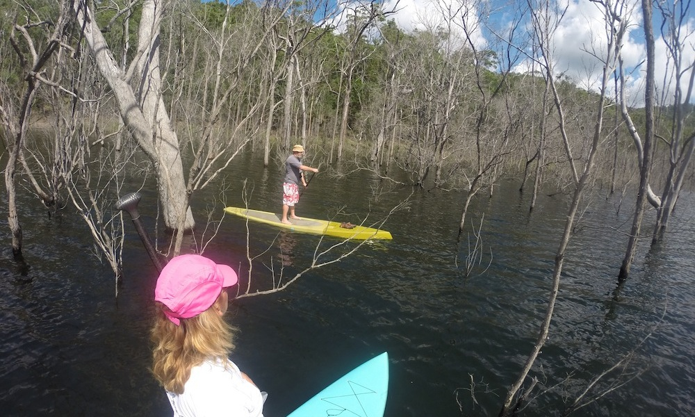 paddle boarding gold coast hinze dam drowned forest2