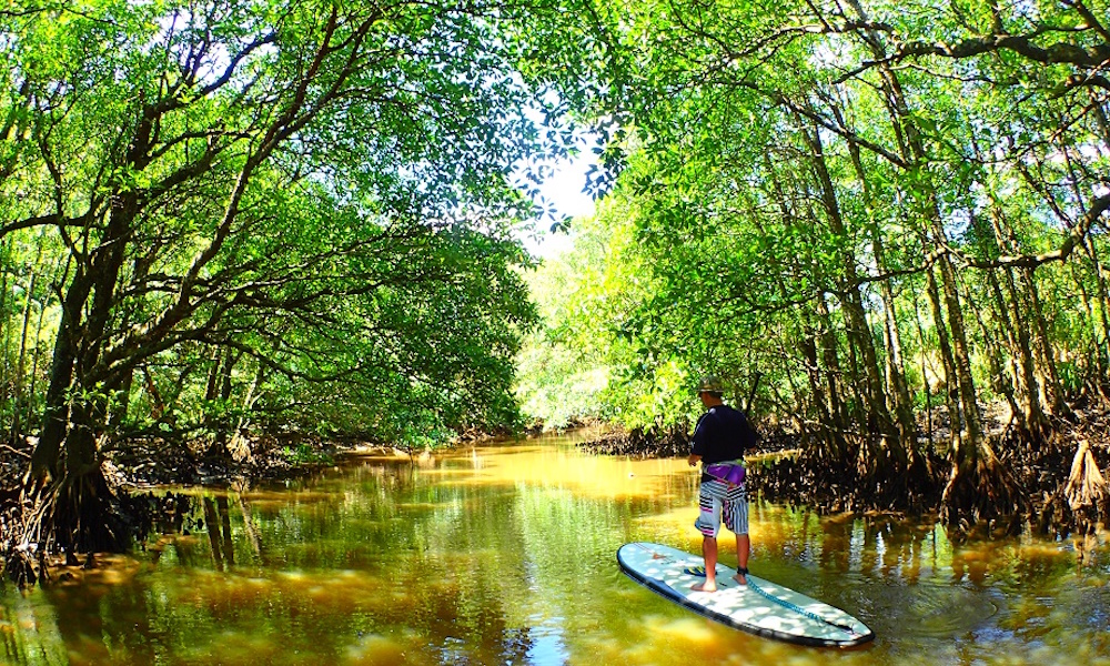 6 places to paddle japan iriomote 4