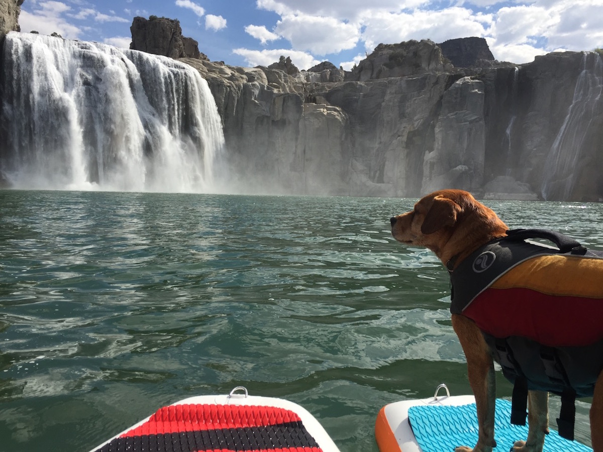 how to get dog comfortable on sup 3