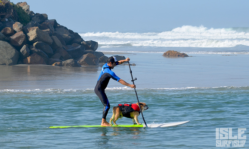 how to paddle with dog 7