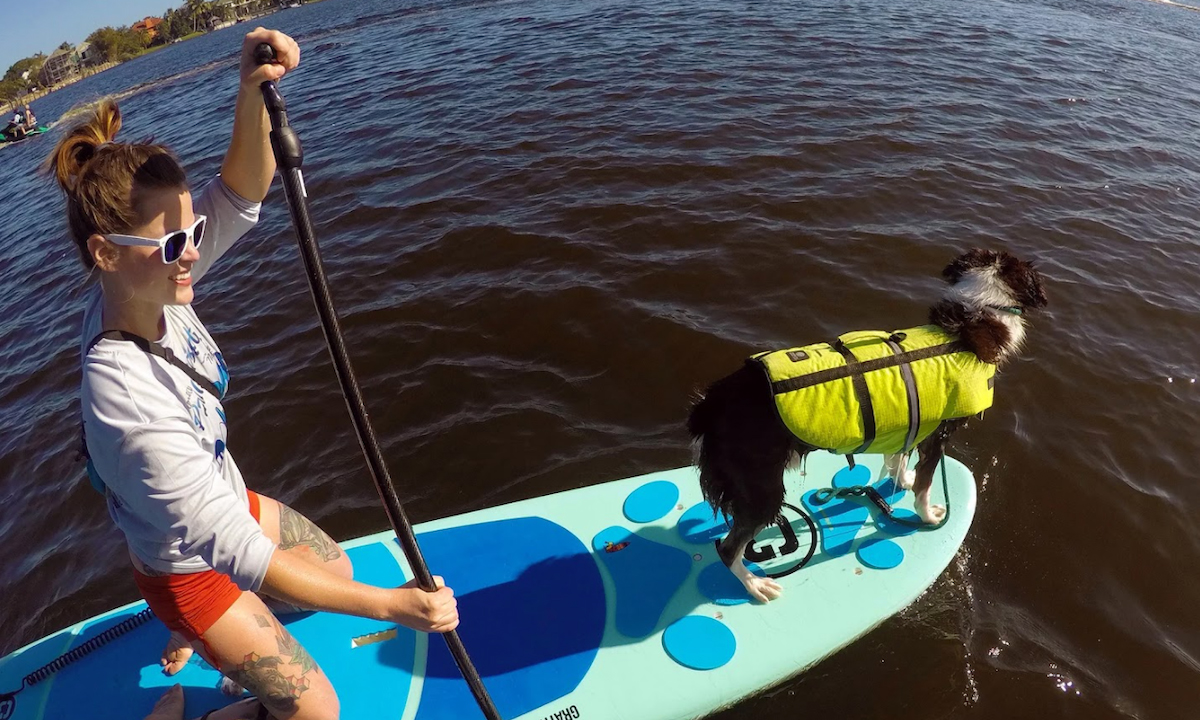 paddling high anxiety dogs tips 1