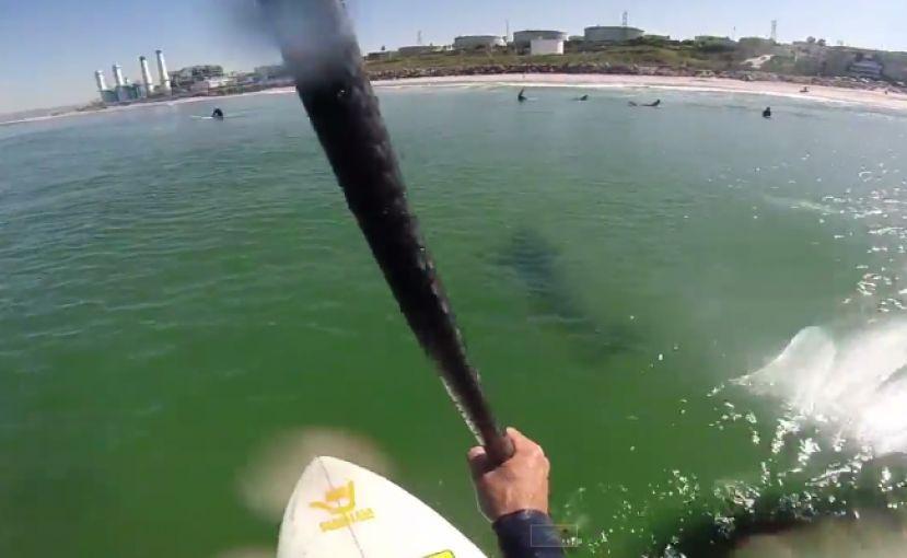 SUP Surfer Films great White Off Manhattan Beach