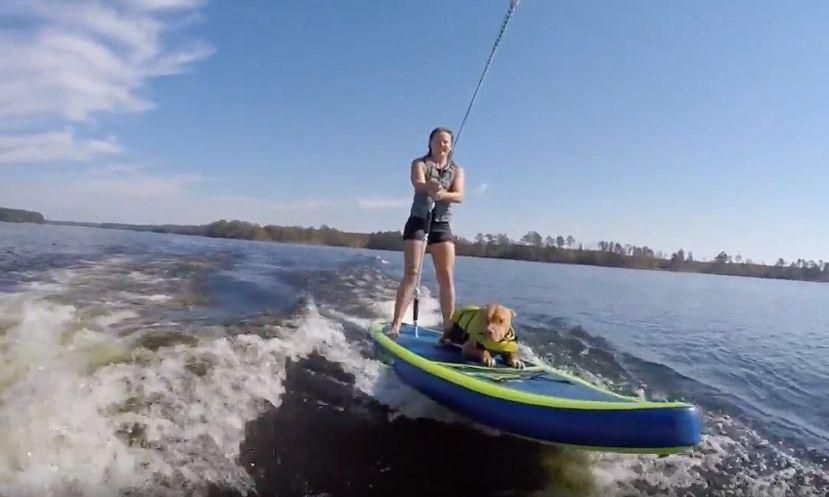 SUPs, Pups, & Wakesurfing