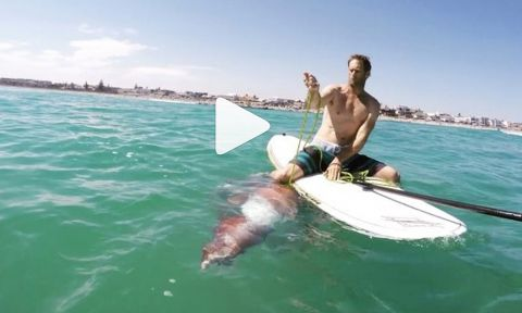 Giant Squid Crawls onto a Paddle Board in South Africa