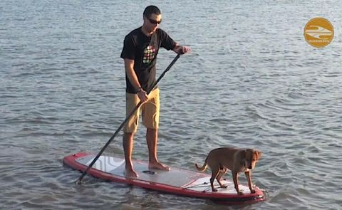 Boardworks Shares How to SUP With Your Dog Video