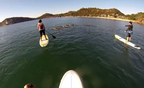 Awesome New Zealand Dolphin Encounter
