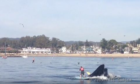 Paddler has a close call with a humpback whale. | Image & video courtesy: Eric Garcia