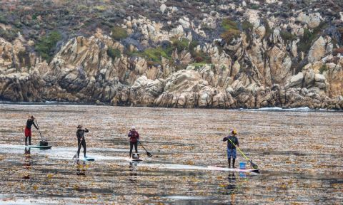 A fun way to do a cleanup? Organize a SUP cleanup! | Photo: Brent Allen