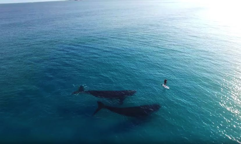 Paddle Boarding With Whales Esperance, Australia