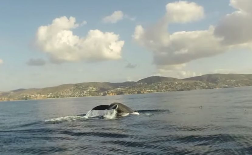 Paddler Experiences Whales, Dolphins And Seals In One Paddle
