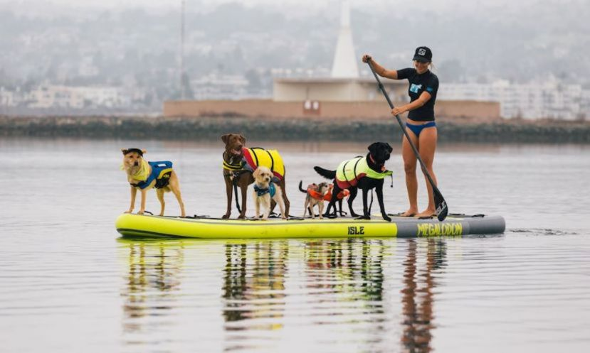Samantha Eastburn with a pack of pups. | Photo: Isle Surf & SUP.