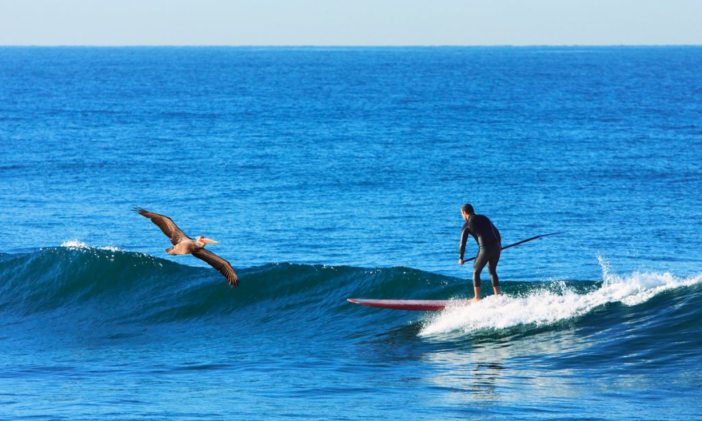 San Diego: The Ultimate SUP Destination