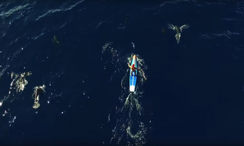 Zane Schweitzer Paddles With Dolphin Pod