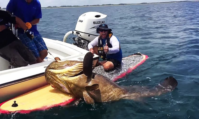 Capt. Ben Chancey is all smiles after reeling in a 400lb. grouper.