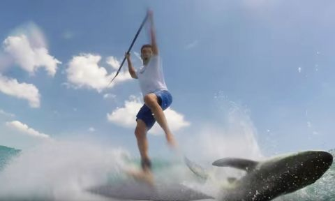 Paddle Boarder Collides With Jumping Shark
