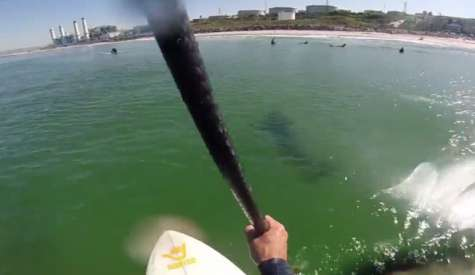 SUP Surfer Films great White Off Manhattan Beach