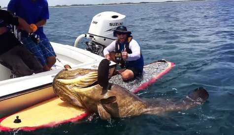 Gargantuan Grouper Caught On Paddle Board